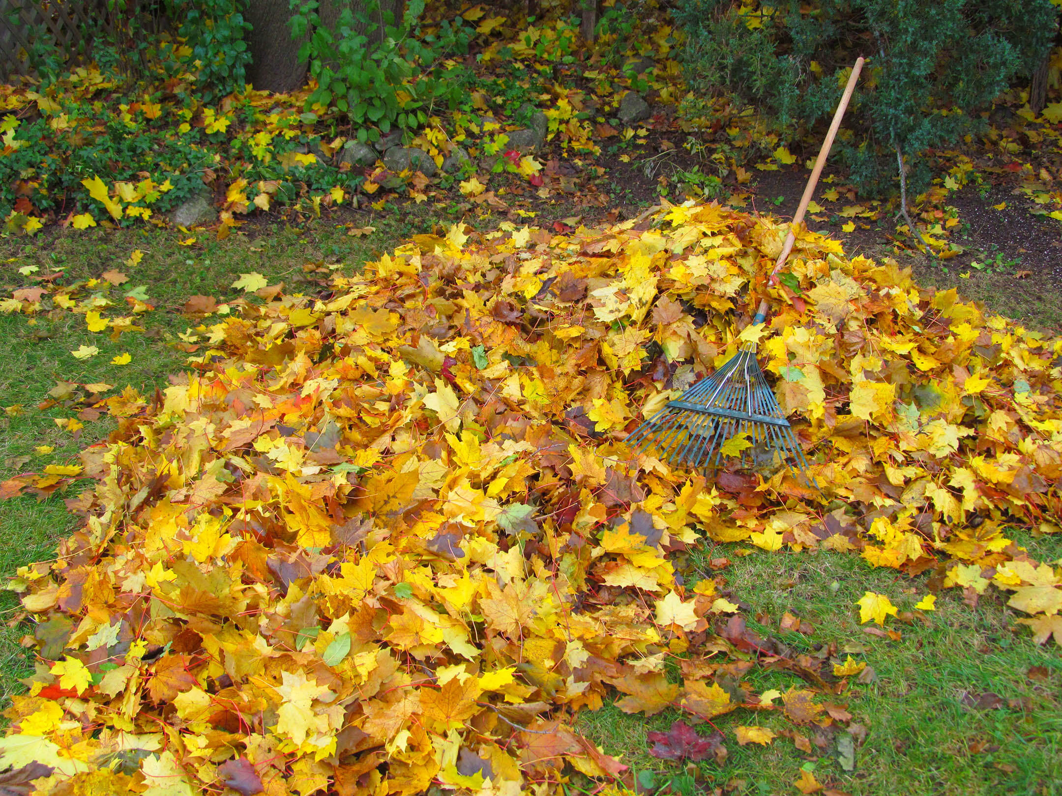 A pile of orange leaves on the ground with a rake laying on them